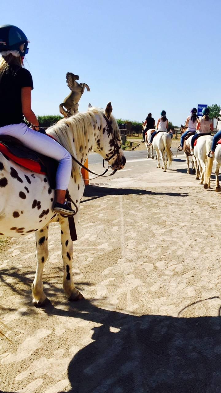 7812486c3b5 Sorties scolaires à cheval au Grau-du-Roi - Ranch pour balade à ...